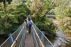 rainforest, suspension bridge, water, river, canopy walkway, forest, rope bridge, jungle, waterway, bridge,