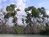 Yucatan Mangroves