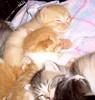 kittuns may 2005