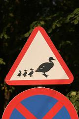 Estonia - Duck crossing