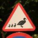 Small photo of Estonia - Duck crossing