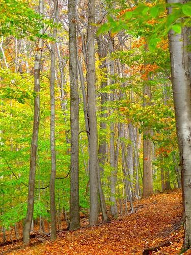 fall nature foliage