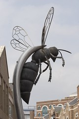 Watford Wasp