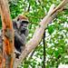 Small photo of Alafia in the tree