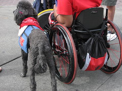 wheelchair racing(0.0), wheelchair(1.0), wheel(1.0),