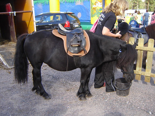 A black pony