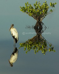 Woodstork,which way is up?