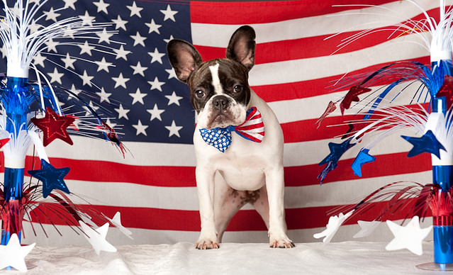 Patriotic French Bulldog, USA