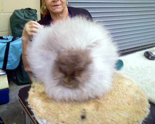 Bunny being fluffed
