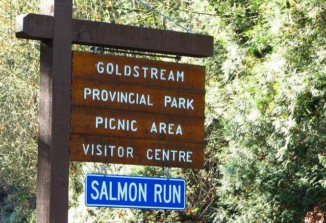 Salmon Run: Click to enlarge
