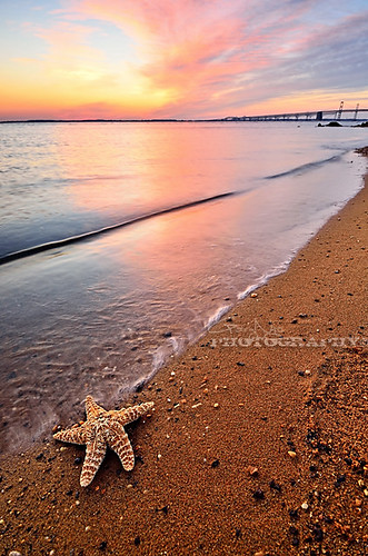 sky seascape reflection beach clouds landscape nikon colorful starfish maryland explore sandypointstatepark photographyblog d7000 sonyphotochallenge