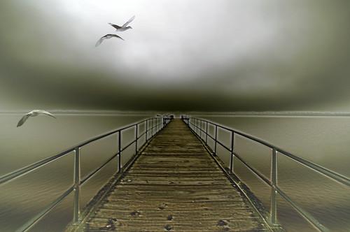 geese flight - 無料写真検索fotoq