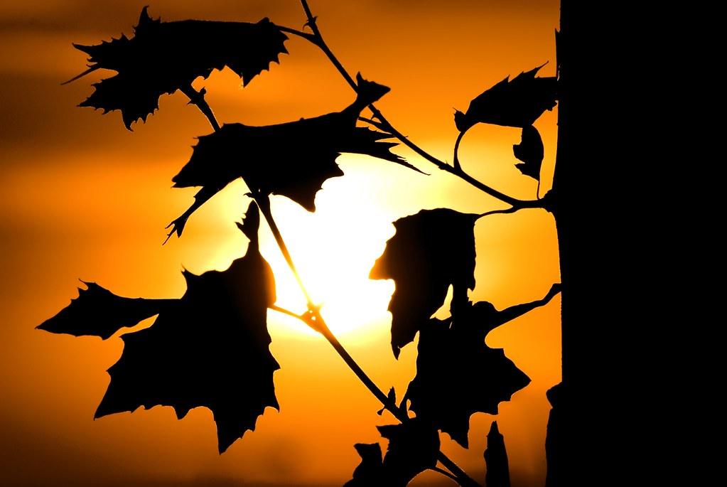 Sunset light / Luz del atardecer