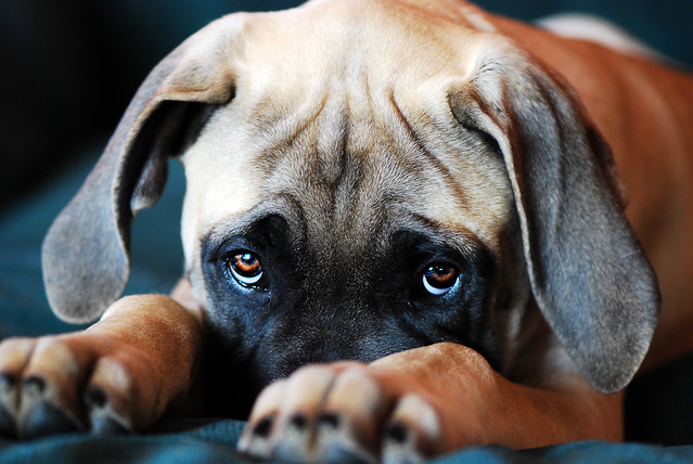 Images Of Sad Puppy Dog Eyes