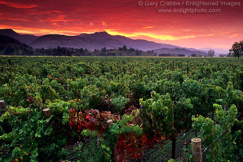 Red Dawn in the Napa Valley