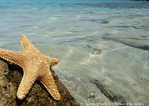 starfish in blue