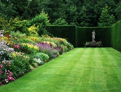 botanical garden, shrub, flower, garden, grass, yard, green, landscaping, hedge, lawn,