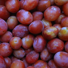 acerola(0.0), malpighia(0.0), pluot(0.0), plant(0.0), nectarine(0.0), myrciaria dubia(0.0), damson(1.0), produce(1.0), fruit(1.0), food(1.0),