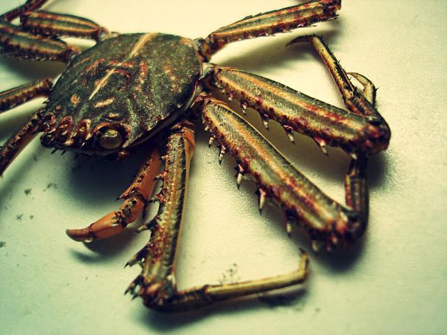 crab variation 1