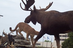 deer, moose, fauna, wildlife, reindeer,