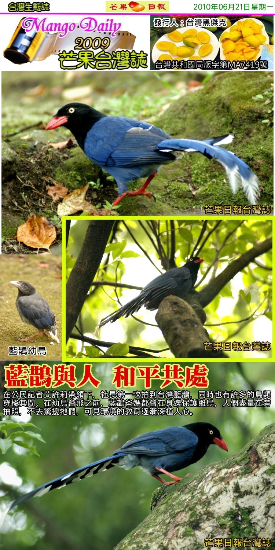 100621芒果台灣誌--台灣生物誌--陽明山國家公園的藍鵲02