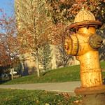 Rusty Yellow Fire Hydrant in Fall - Pelham, NY