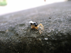 Wasp Dismembering Spider - Photo of Bierry-les-Belles-Fontaines