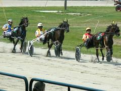 animal sports, racing, equestrian sport, sports, race, horse, horse harness, race track, jockey, harness racing,
