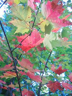Apple Colored Foliage