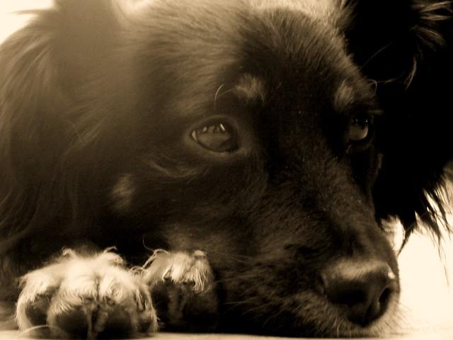Muenster Dog Food Petsmart