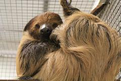 animal, sloth, pet, mammal, fauna, animal shelter,
