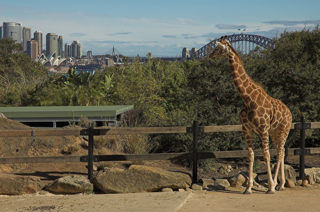 20050620-06 Taronga Zoo trip