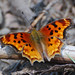 Commas - Photo (c) Jerry Oldenettel, some rights reserved (CC BY-NC-SA)