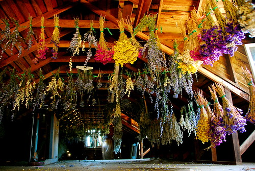 Drying flowers in the attic at King Estate Winery