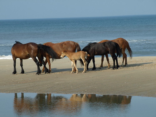 Wild Horses - 3h