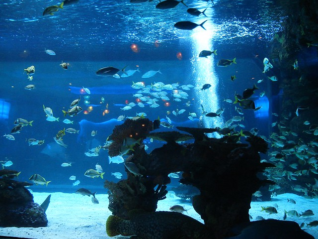 Houston Aquarium 02 Flickr Photo Sharing