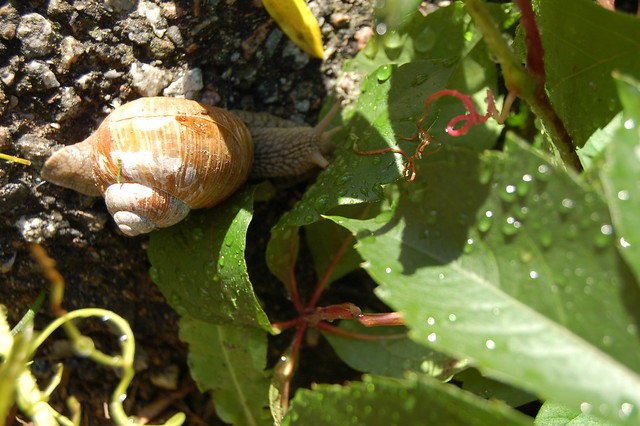 Snail home