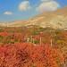 Colours of Autumn - رنگهای پاییز