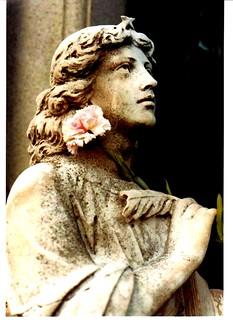 Carnation Angel