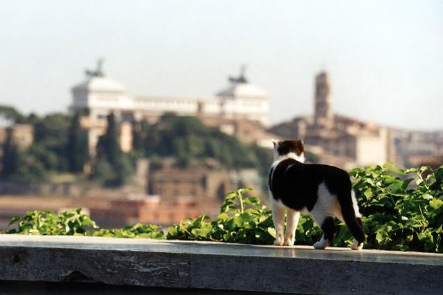 Gatto di Roma