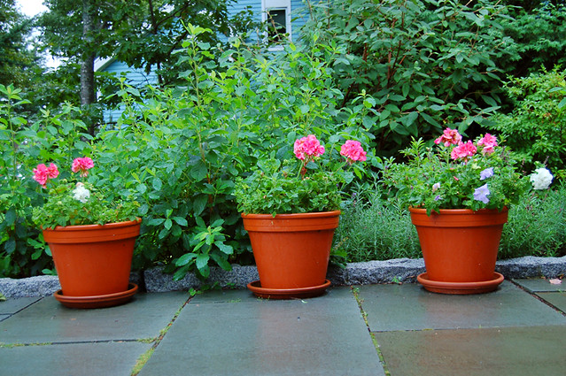 3 potted plants on the patio flickr photo sharing