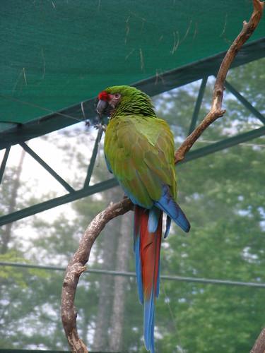 birds macaws