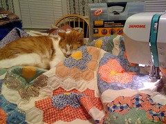 10 November 2010 - 6:22pm - Tenzing is determined to stay on this quilt. Sometimes it is easier to just work around him.