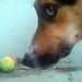 DSC00003.jpg by dogshank