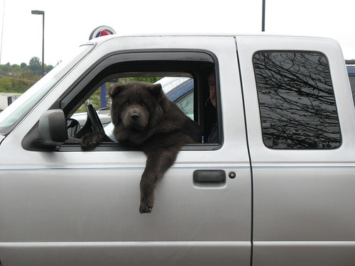 Look Whose Driving!!!!!!! by Chris Breeze