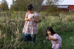 Girls Opening Milkweed