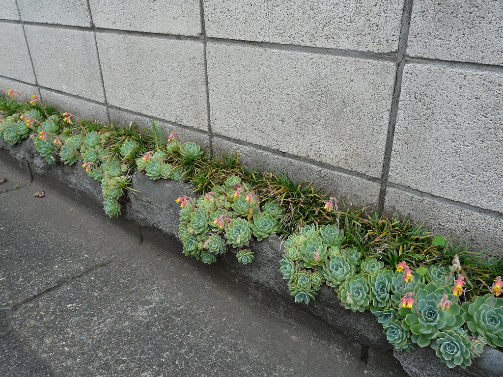 Curbside garden space in concrete and rocks fixes for Curbside garden designs