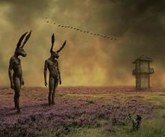 wandering the purple moor