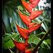 Robert's garden, Costa Rica (6)