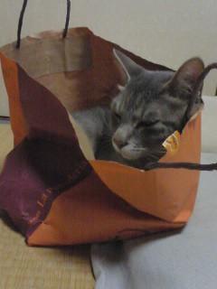 Cat sleeping bag inside